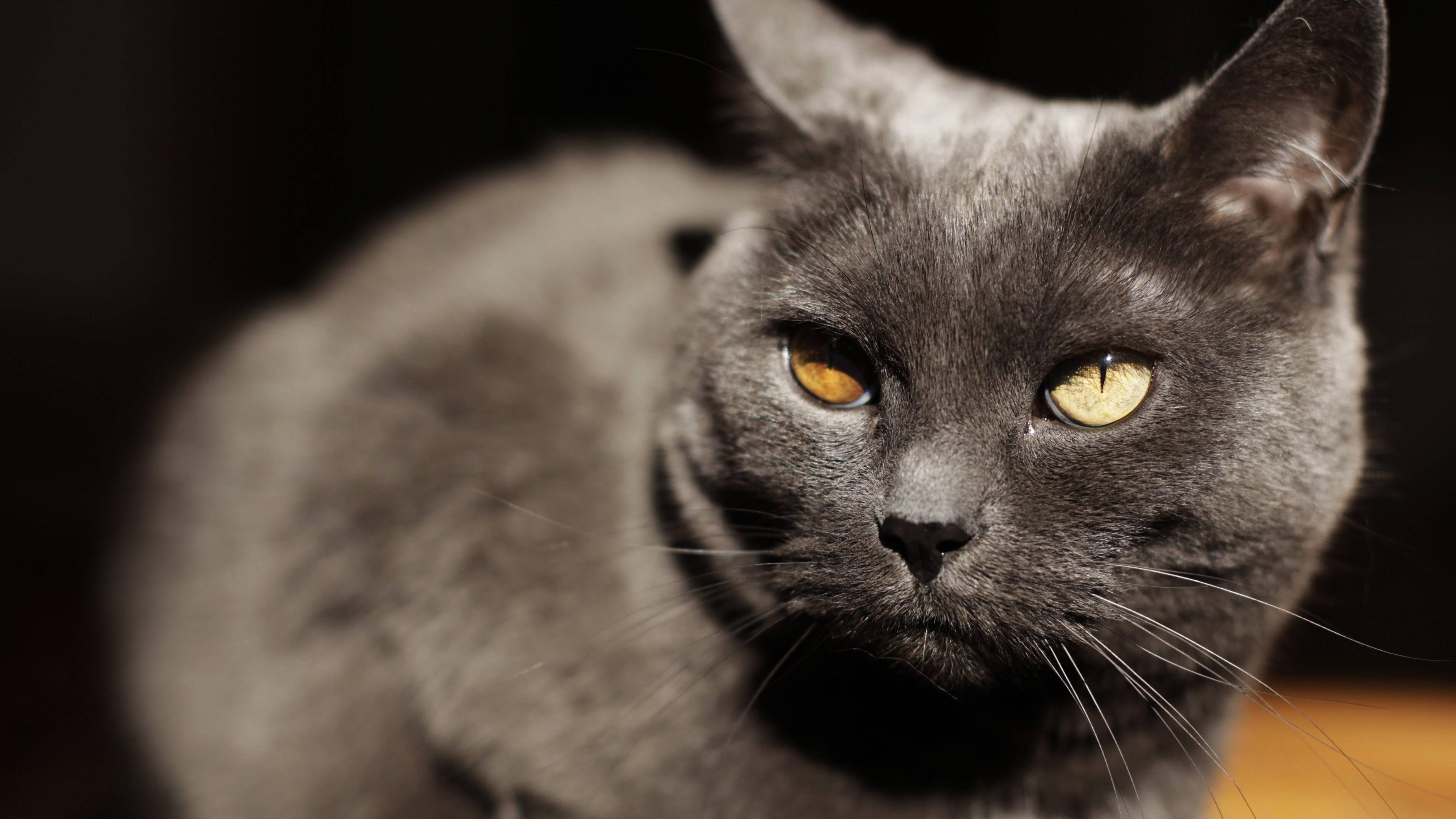 Katze frisst und trinkt nicht - das können Sie tun