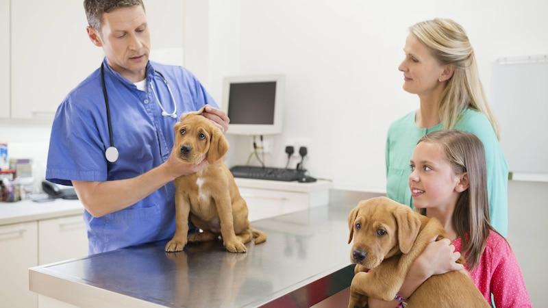 Eine Ohrenentzündung bei Ihrem Hund sollten Sie vom Tierarzt behandeln lassen.