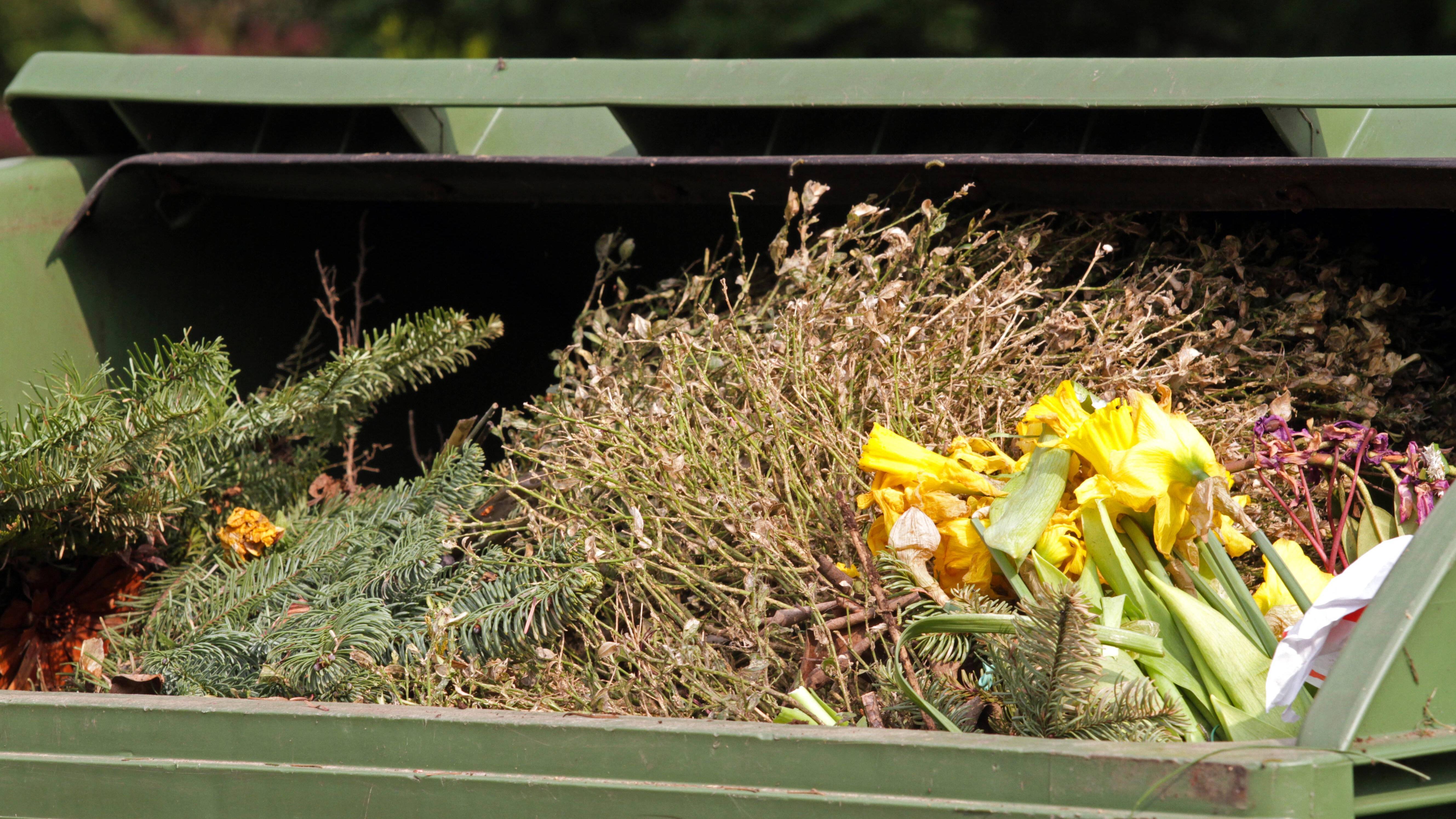 Grasnarbe lässt sich auch problemlos über den Bio-Abfallcontainer entsorgen.