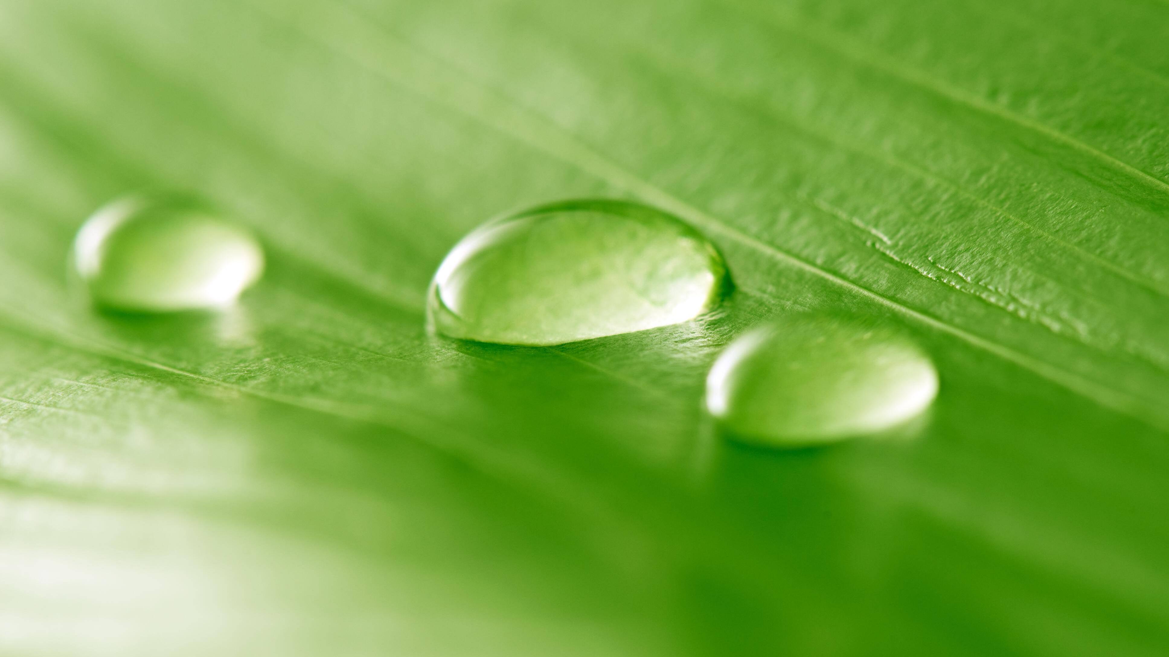Chlorophyll Tropfen: Wirkung des grünen Pflanzenfarbstoffs und mögliche Nebenwirkungen