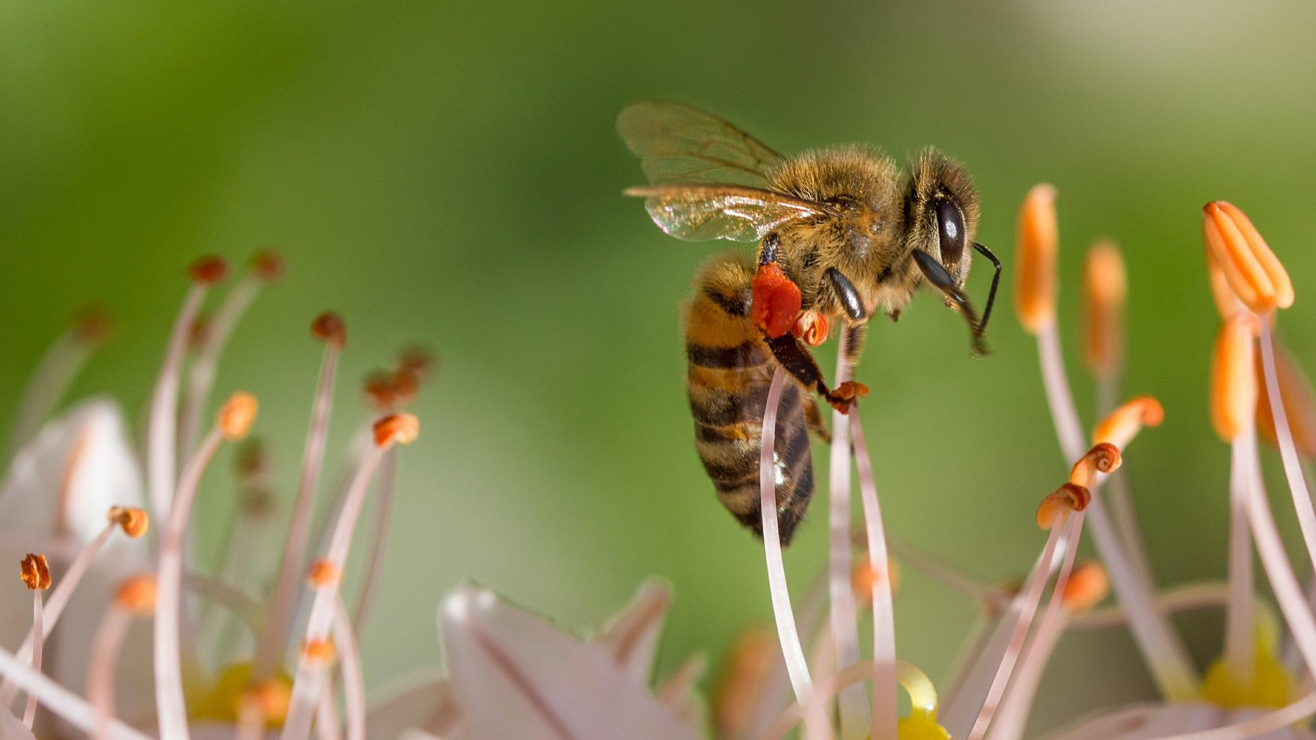 Für Bienen und Co.: Ein artgerechter Garten ist besonders umweltschonend