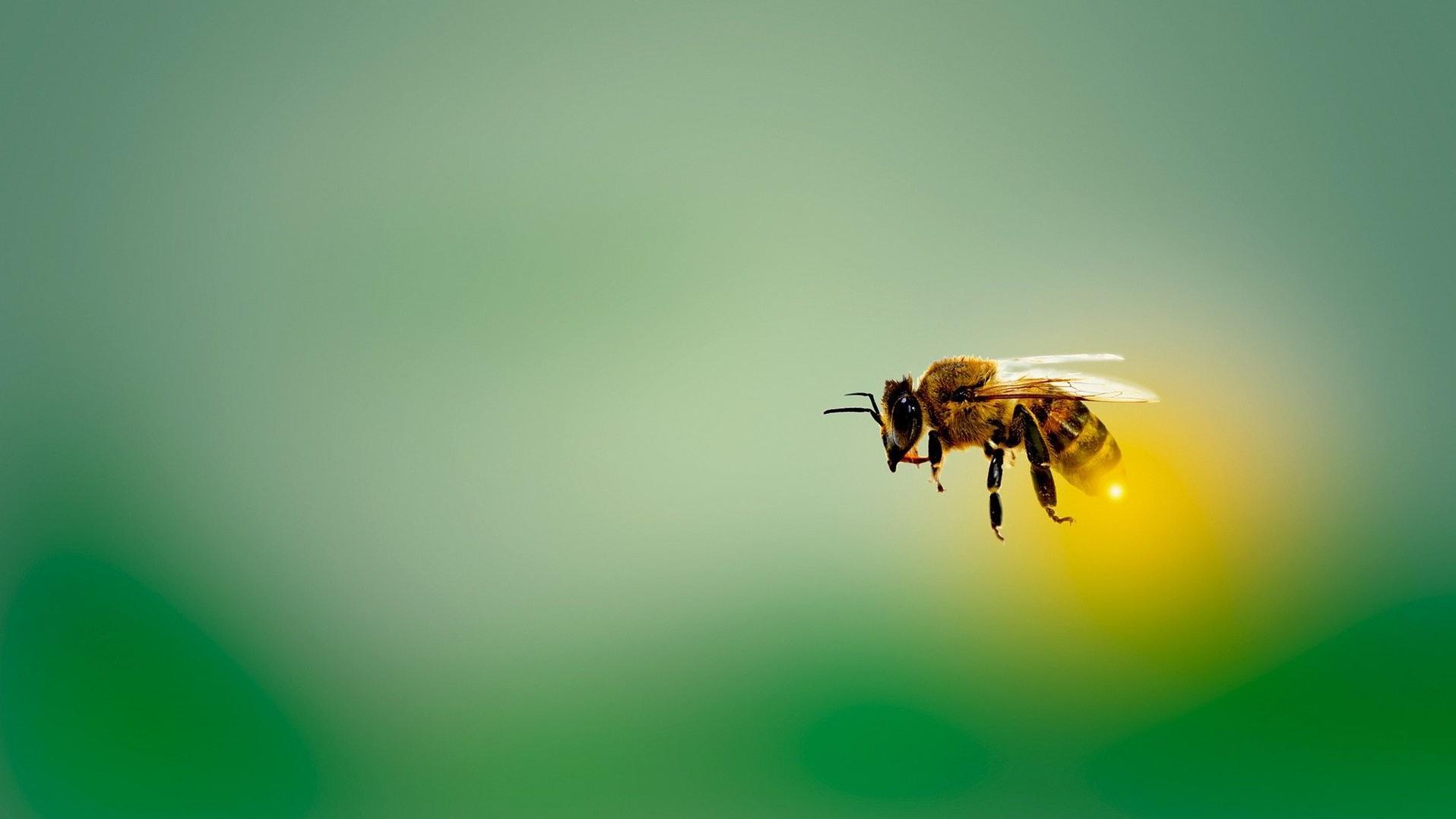 Bienenstich - diese Hausmittel helfen am besten gegen die Schwellung