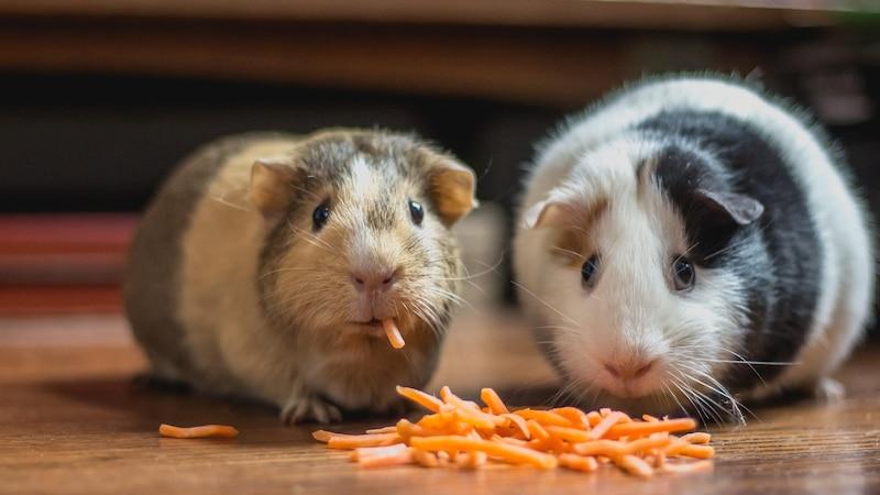 Haustiere für Anfänger: Diese Tiere sind besonders pflegeleicht