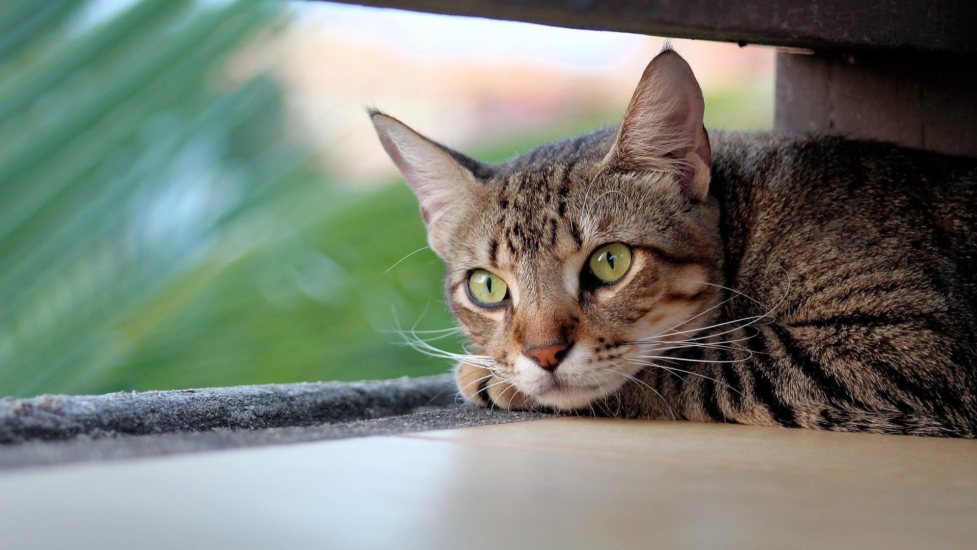 Die Lebenserwartung bei einem Tumor bei einer Katze kann der Tierarzt einschätzen.