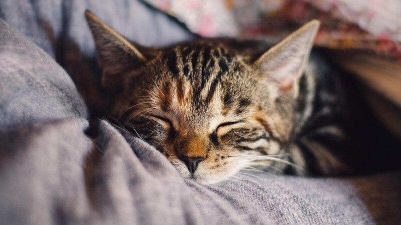 Katzen als Haustiere benötigen wenig Platz.