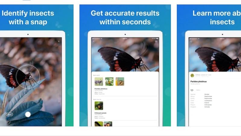 Picture Insect - Insekten ID bietet zahlreiche Möglichkeiten zur Bestimmung.