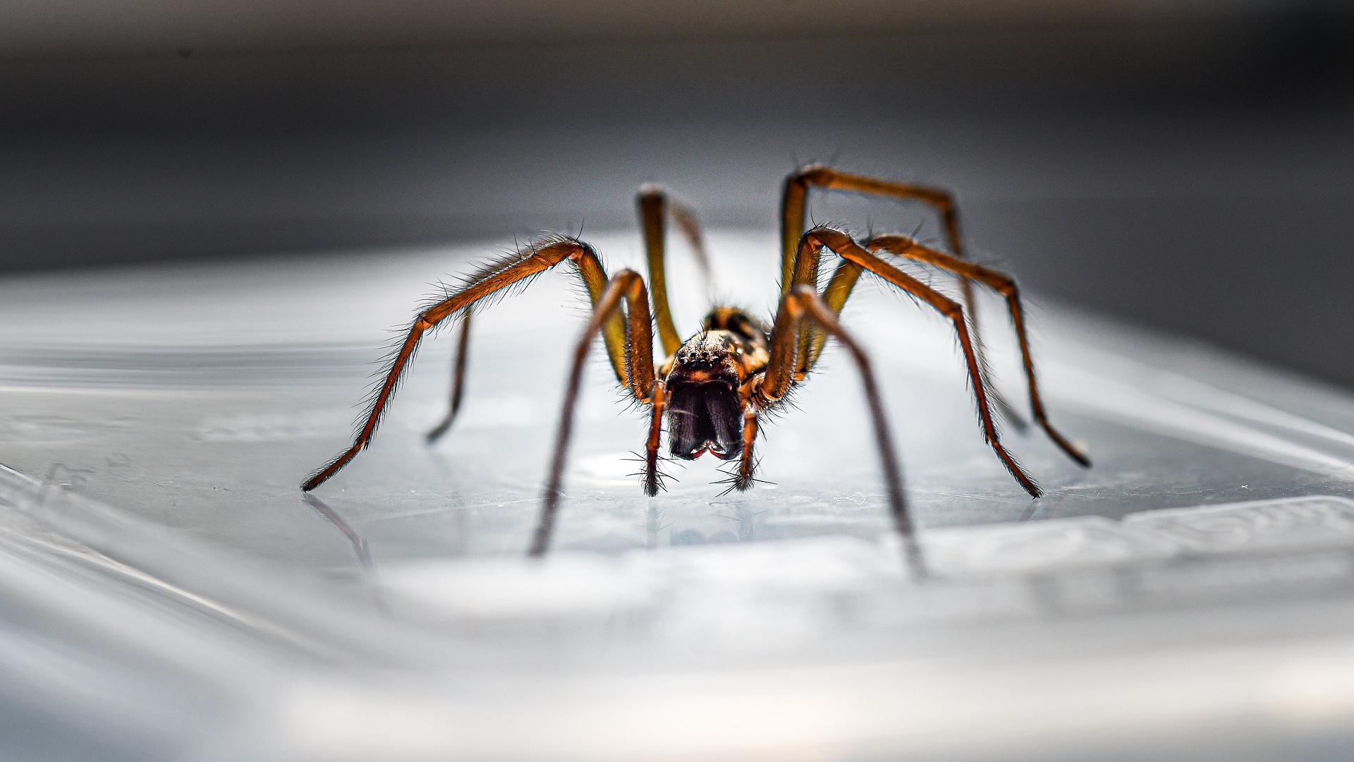 Spinnen in Deutschland: Diese Arten gibt es bei uns