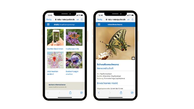 Nabu Web App