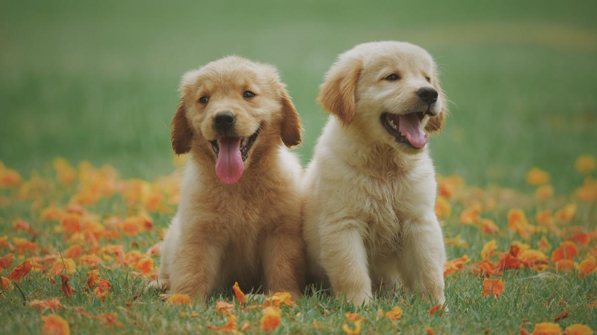 Hunde sind die perfekten Haustiere für Menschen mit Sternzeichen Widder.