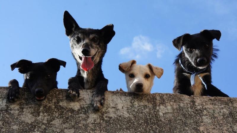 Haustiere für Ihr Sternzeichen: Diese Tiere passen zu Ihnen