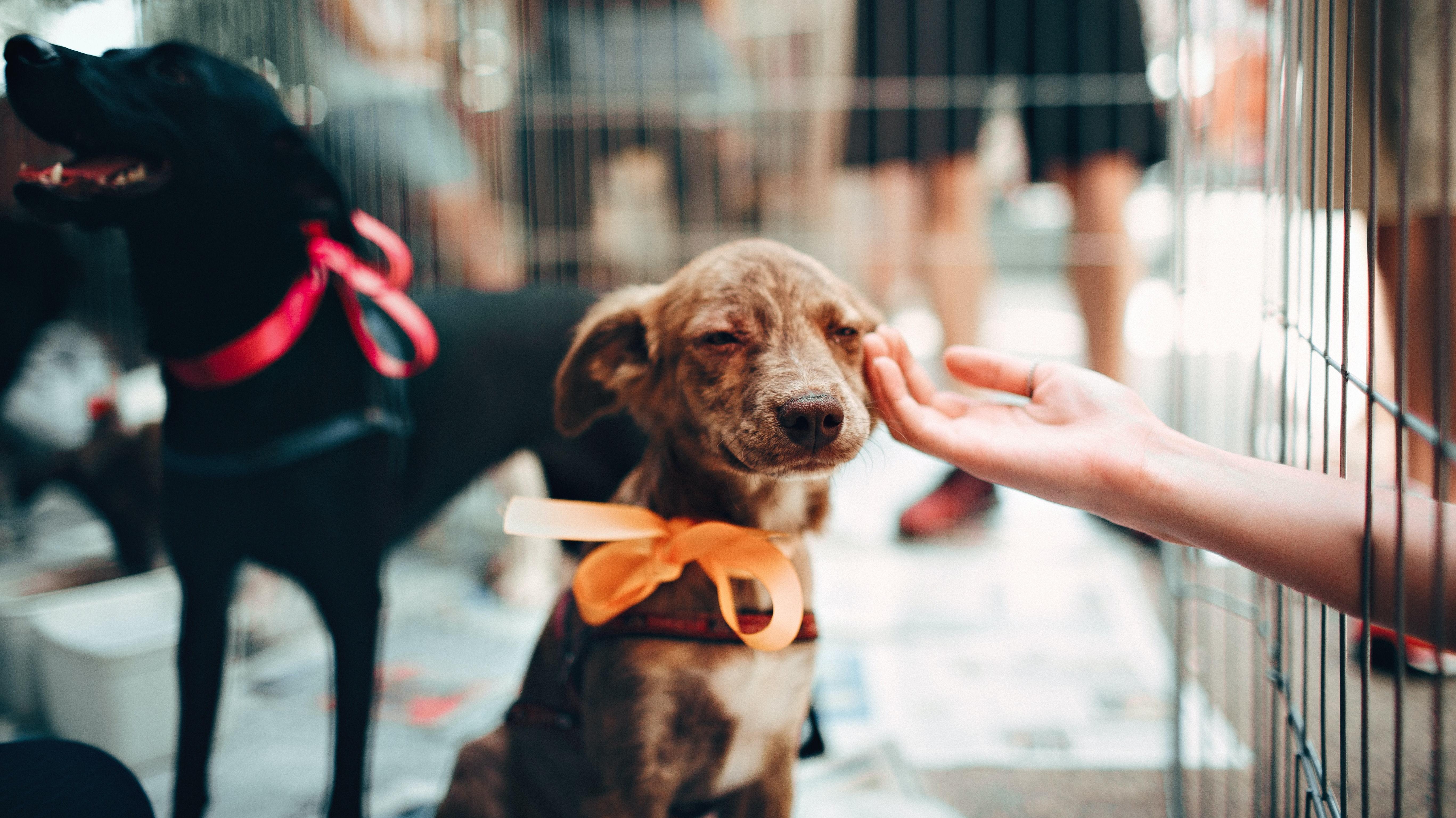 Möchte man seinen Hund im Tierheim abgeben, ist es wichtig, an alle nötigen Schritte zu denken und dem Hund die Eingewöhnungszeit zu erleichtern - etwa mithilfe vertrauter Gegenstände.