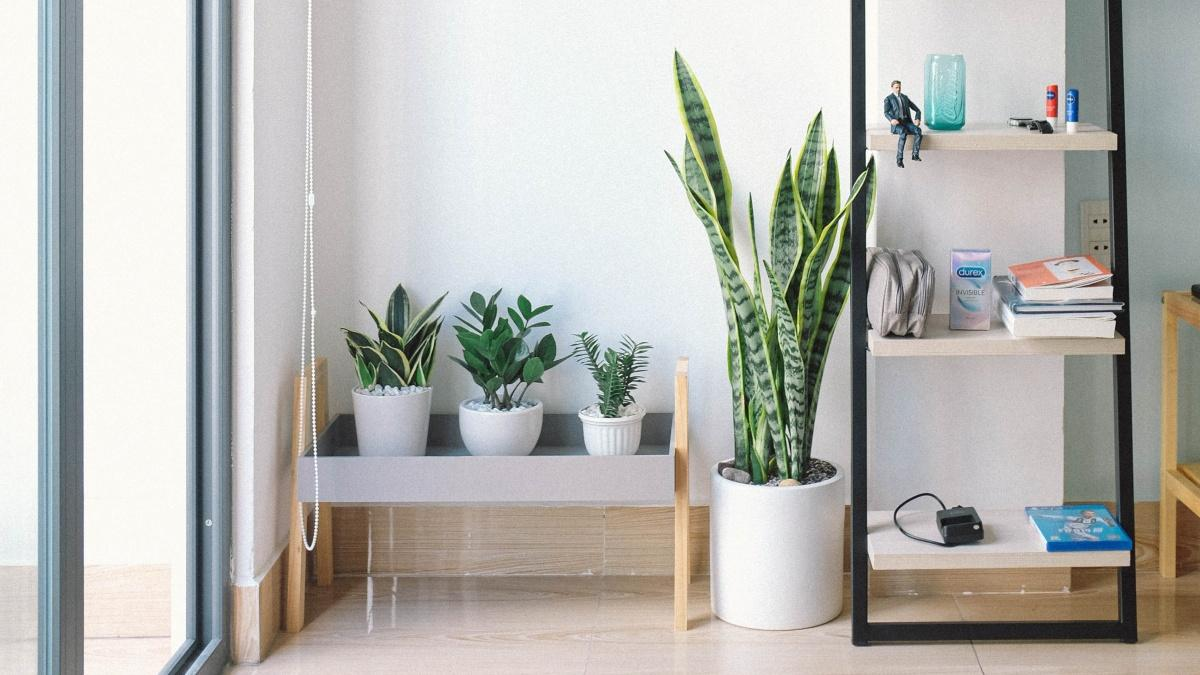 Nachhaltige Zimmerpflanzen: Darauf sollten Sie beim Kauf achten
