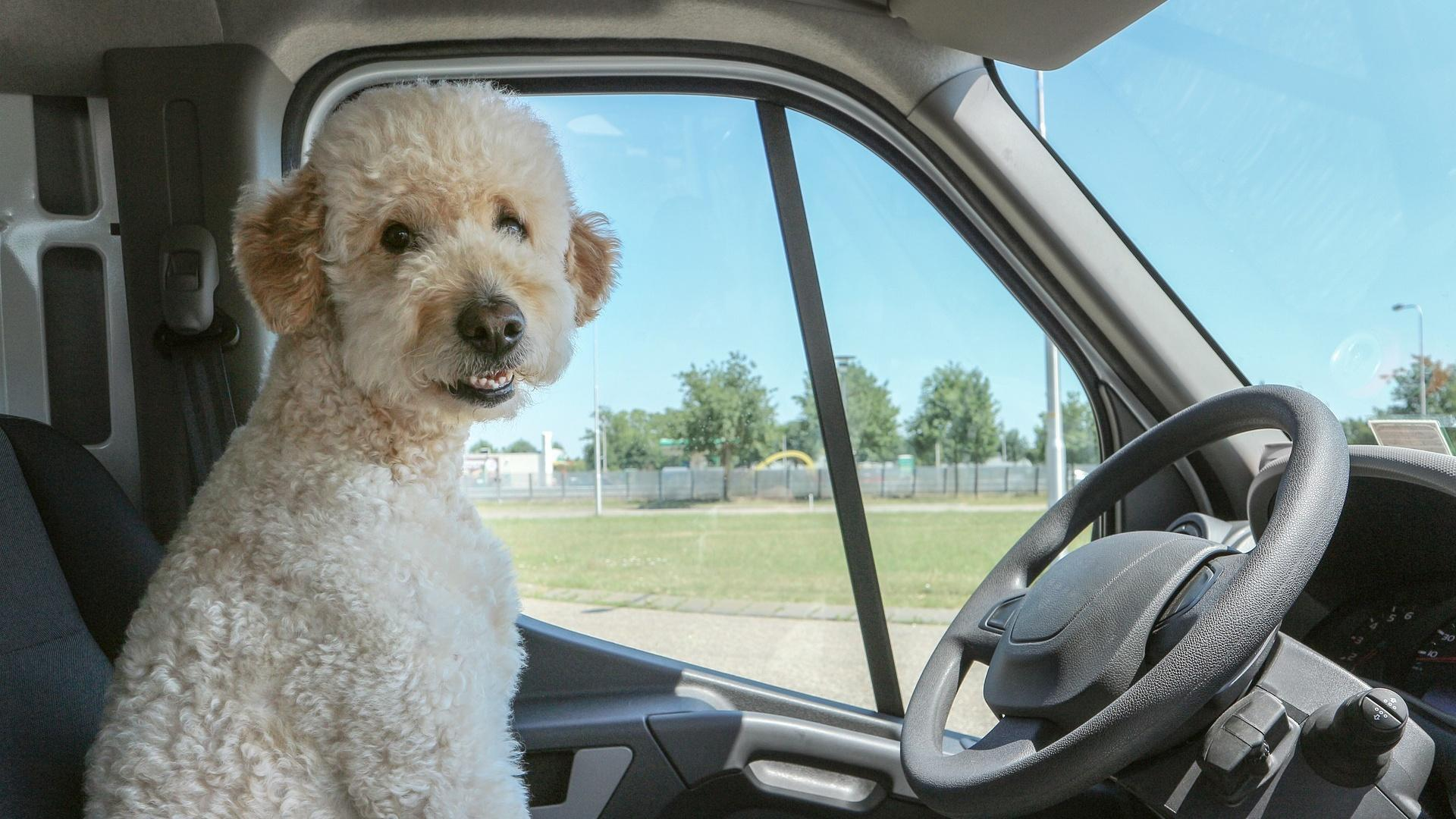 Verreisen mit Hund: Eine gute Planung macht viel aus.
