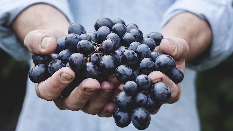 Durchfall durch Weintrauben - Ursachen und was Sie darüber wissen sollten