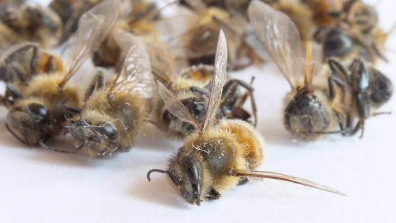 Sandarium bauen: So legen Sie den Nistplatz für Wildbienen an