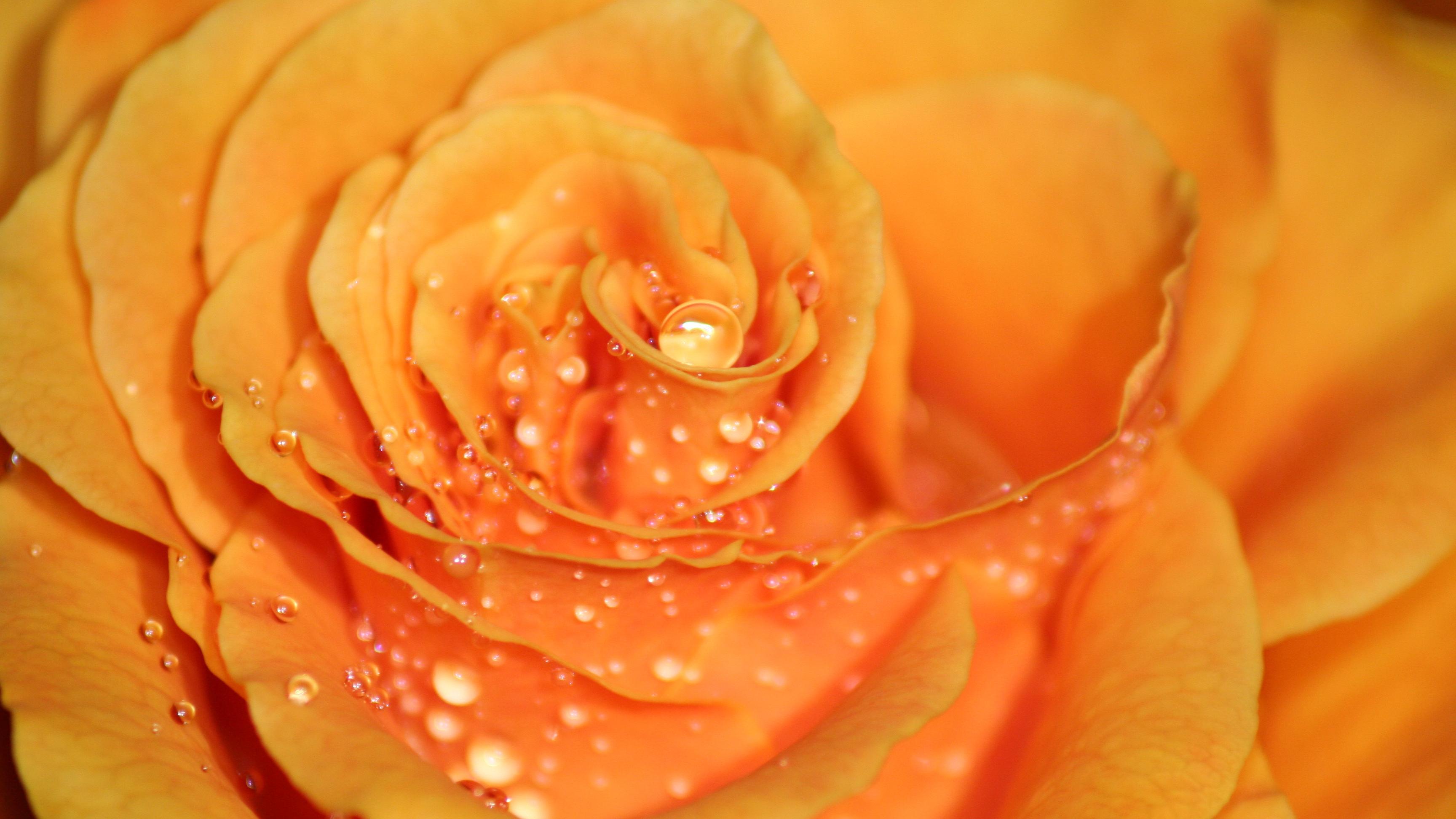 Wann Rosen pflanzen? Tipps und Infos zum idealen Zeitpunkt