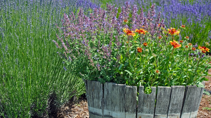 Duftende Gartenpflanzen: 10 Ideen für Balkon und Garten