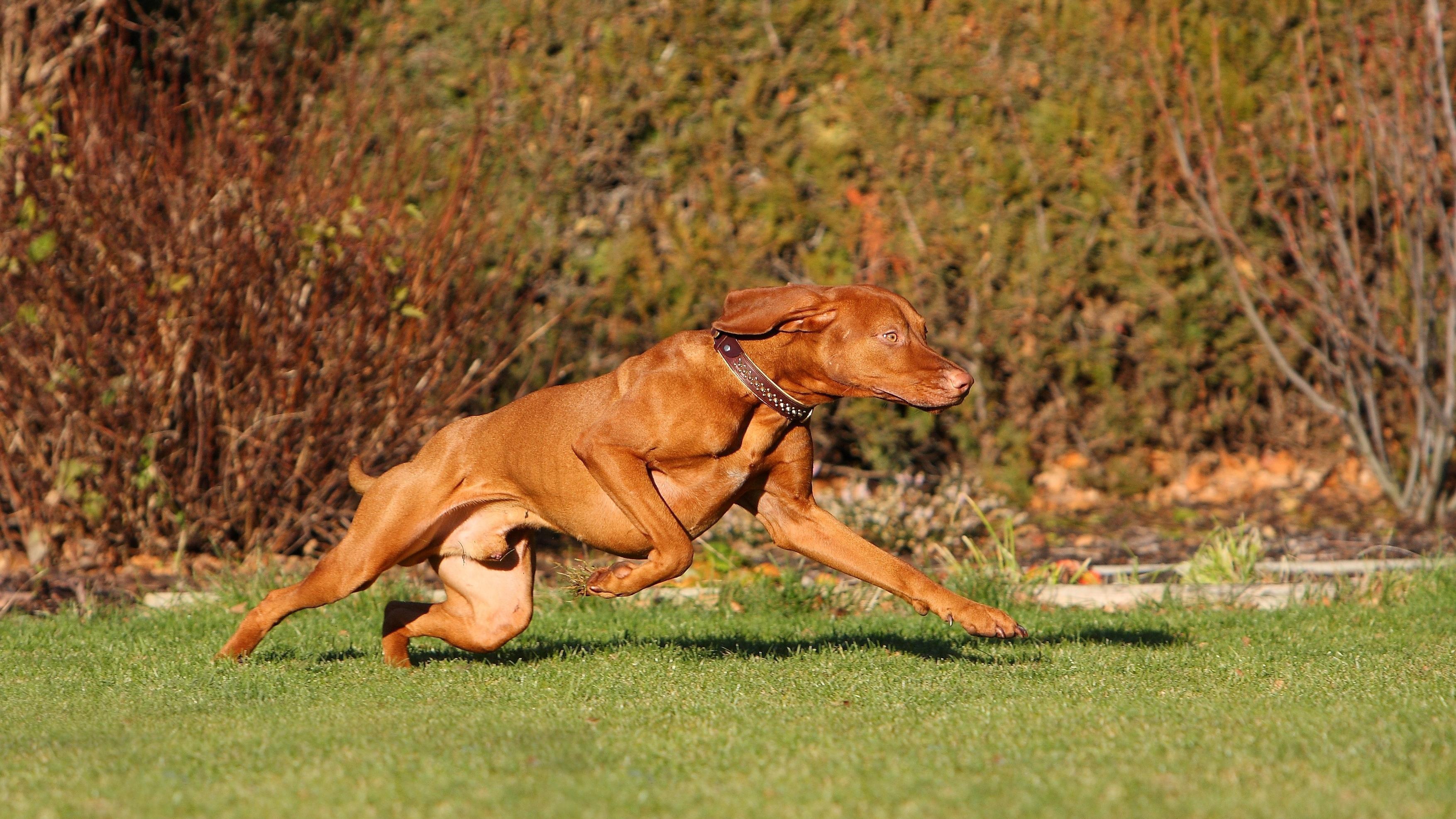 Muskelkater beim Hund: Das müssen Sie wissen