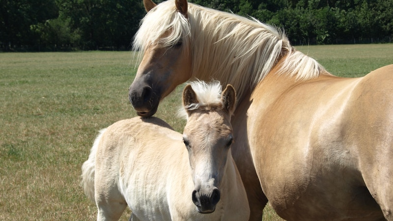 Zeckenbisse können auch für Pferde gefährlich sein
