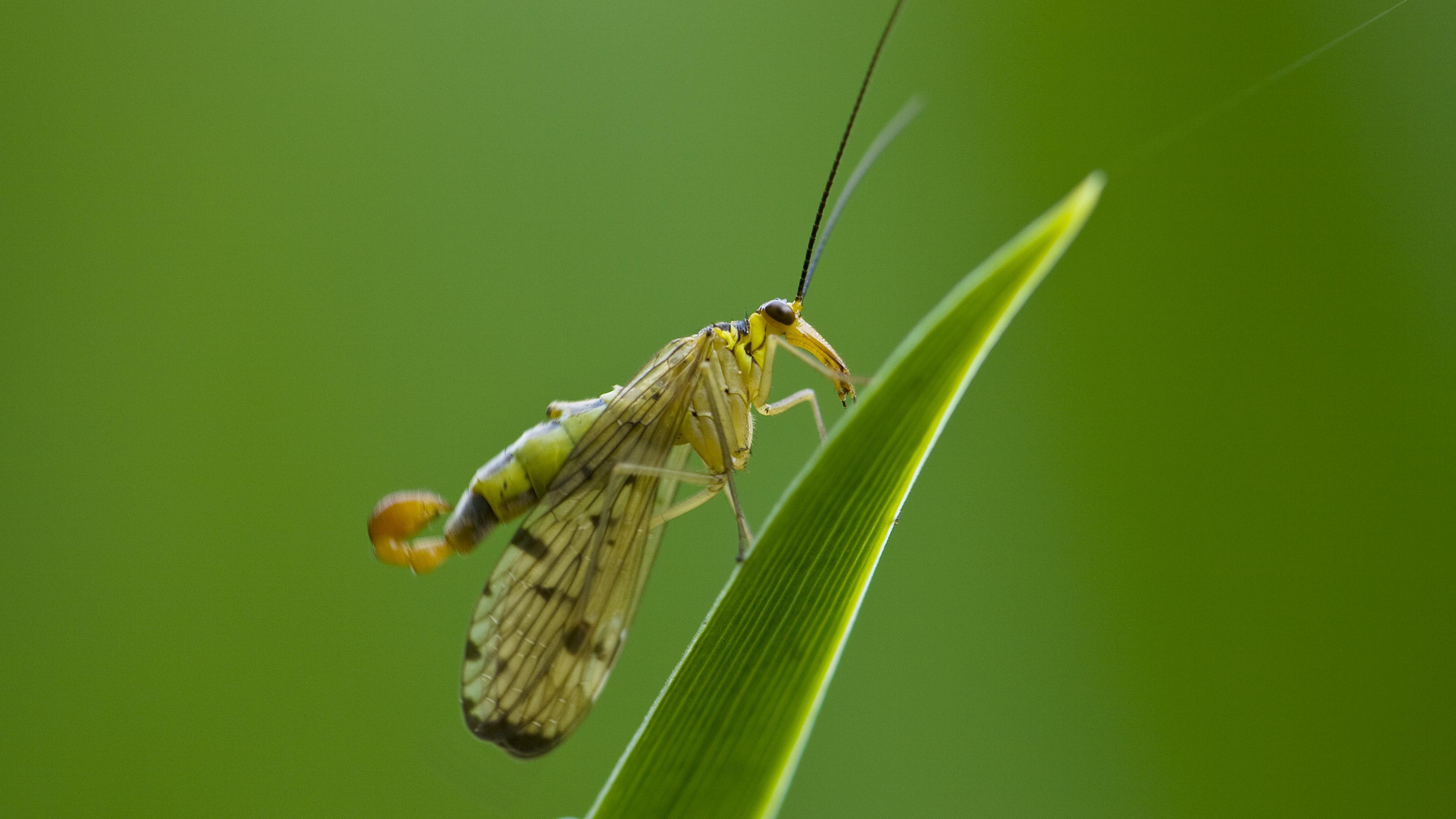 Mückenschutz selber machen: DIY-Tipps gegen Mückenstiche