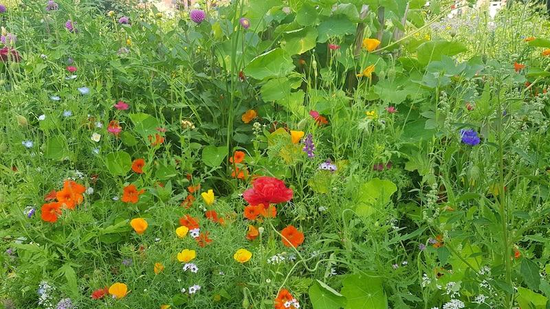 Ein ökologischer Garten bieten Lebensraum für Menschen, Pflanzen und Tiere.