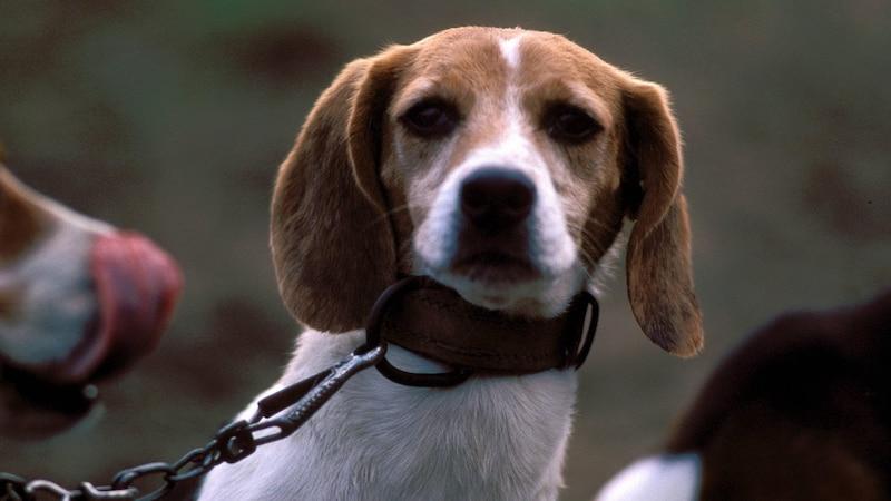 Augenpflege beim Hund: Darauf sollten Sie achten