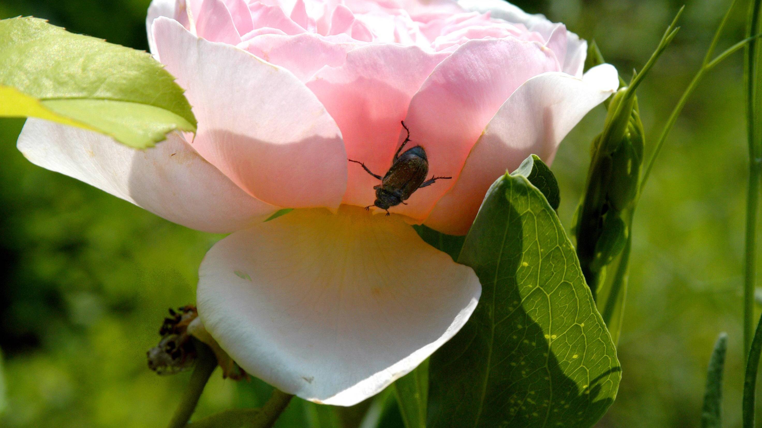 Duftende Gartenpflanzen locken auch Insekten an und bieten ihnen Nahrung.