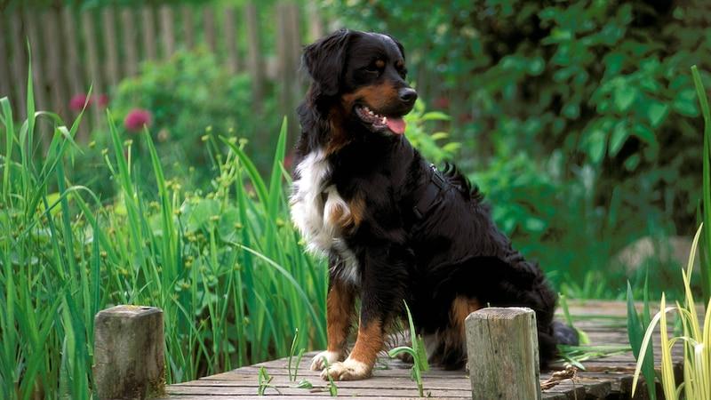 Ein Hundebesitzer sollte den Garten hundesicher machen.