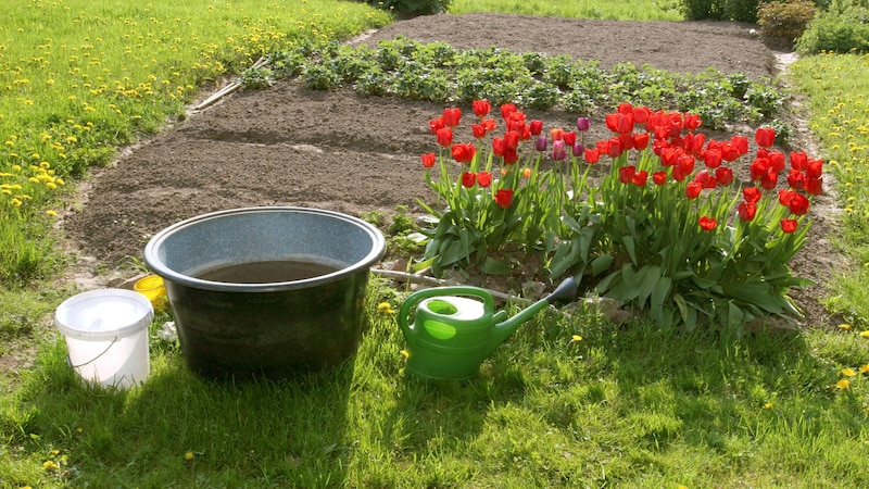 Regenwasser ohne Regenrinne sammeln Sie einfach in Eimern oder Regentonnen.