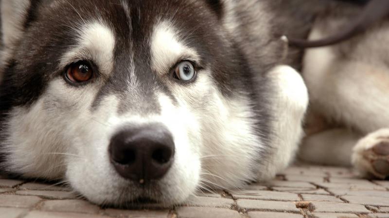 Augenkrankheiten auch beim Hund möglich