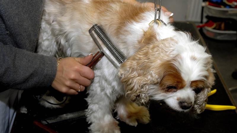 Ihren Hund können Sie selber trimmen.