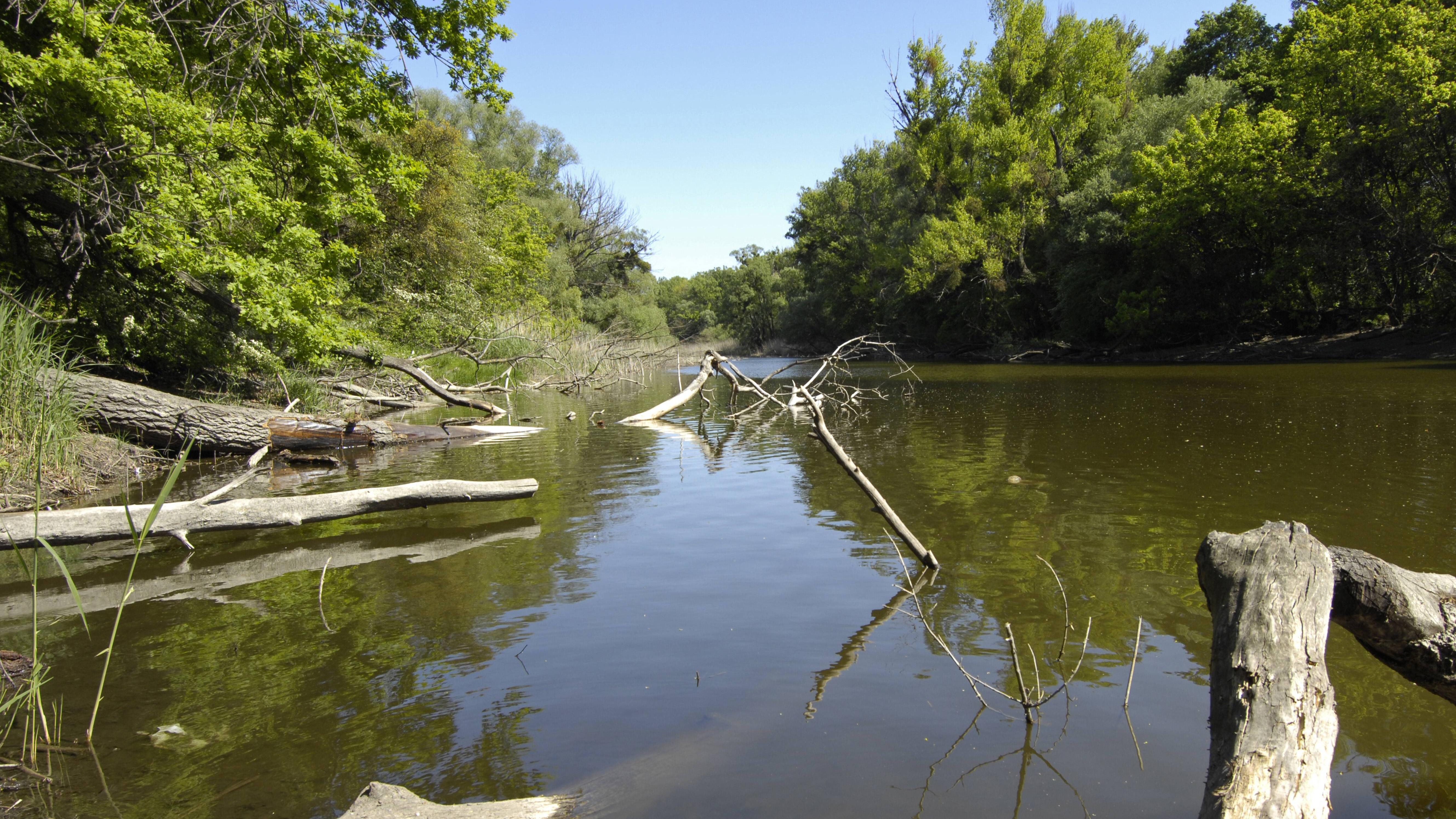 Bei der Renaturierung von Fließgewässern werden Flussauen angelegt.