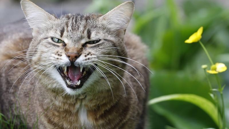 Zahnpflege bei Katzen: Darauf sollten Sie achten