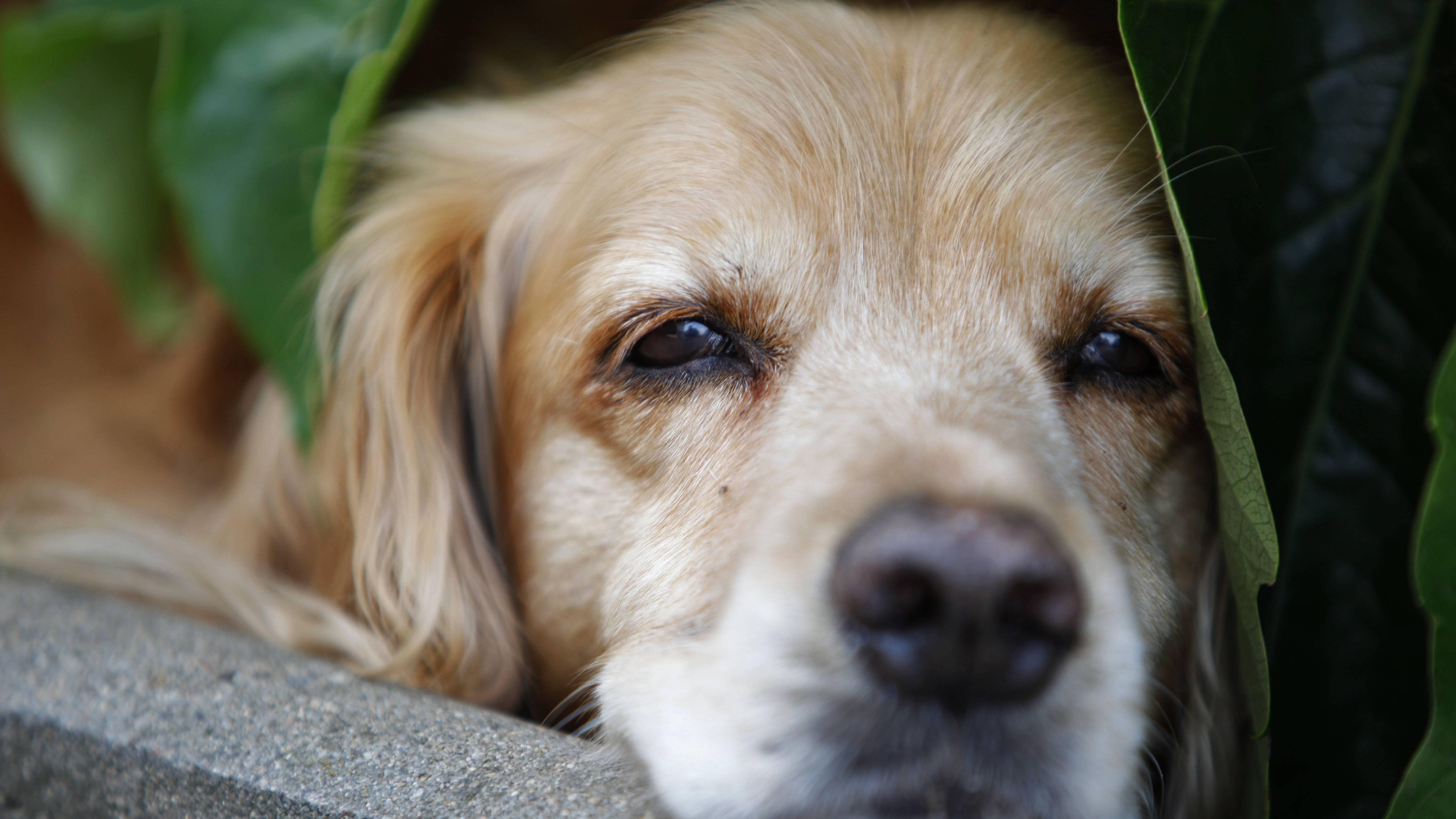 Auch Ihre Haustiere können bei Hitze müde werden, geben Sie mehr zu trinken.