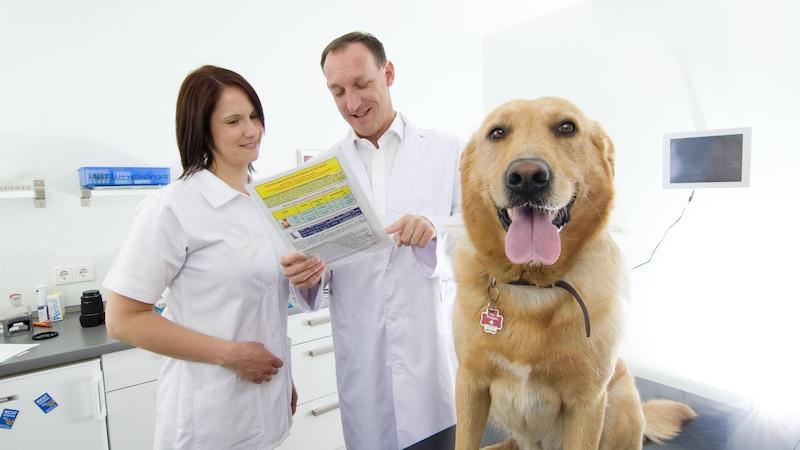 Bewegt sich Ihr Hund immer weniger, sollten Sie ihn vom Tierarzt untersuchen lassen.