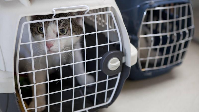 Katze im Flugzeug: Tipps und Hinweise zur Flugreise mit Katze