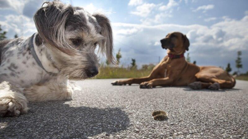 Insektenstich beim Hund: So helfen Sie Ihrem Vierbeiner