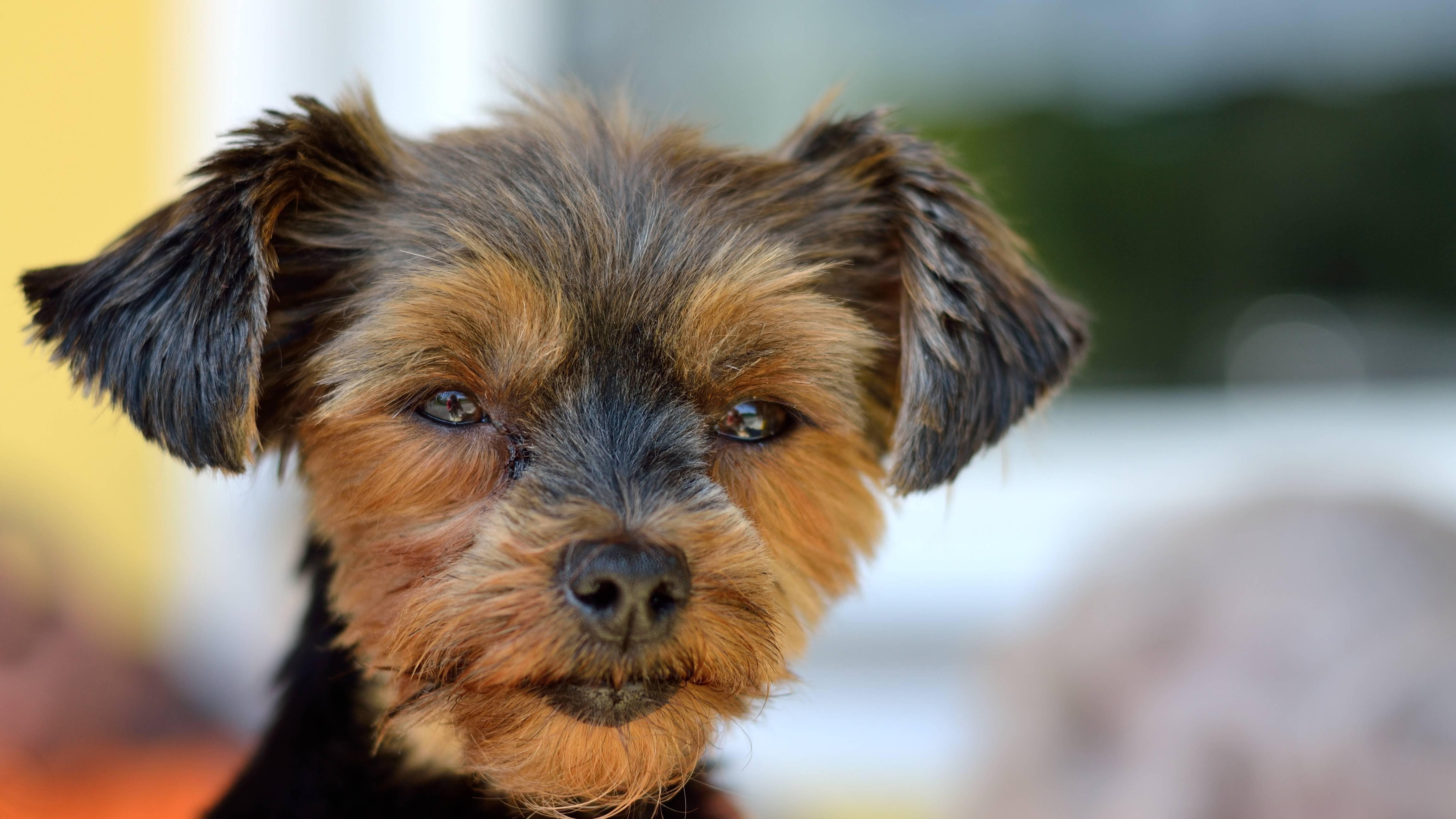 Die Augenpflege beim Hund ist sehr wichtig, um Erkrankungen vorzubeugen.