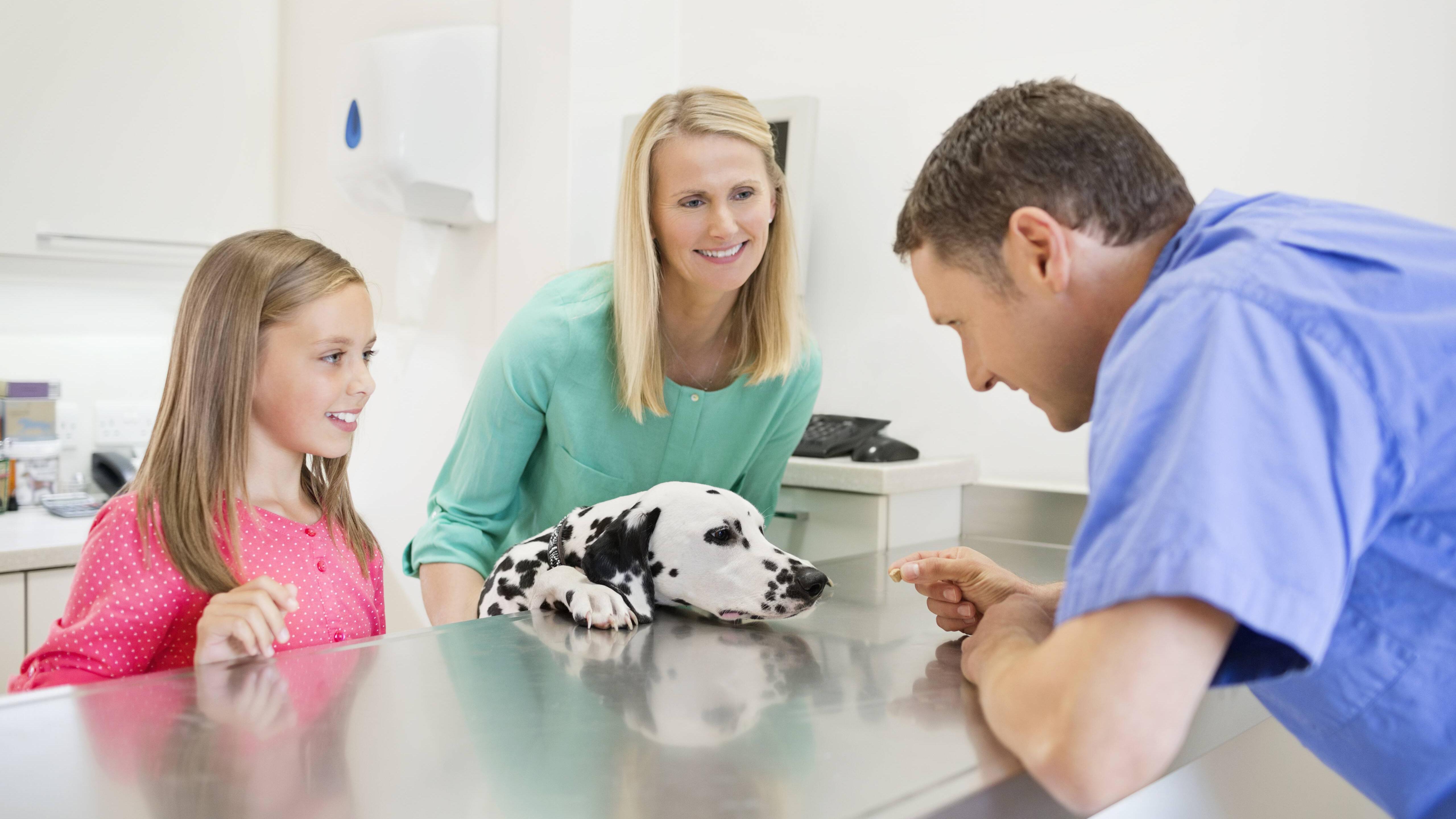 Ultraschall beim Hund: Das sollten Sie zur Untersuchung wissen