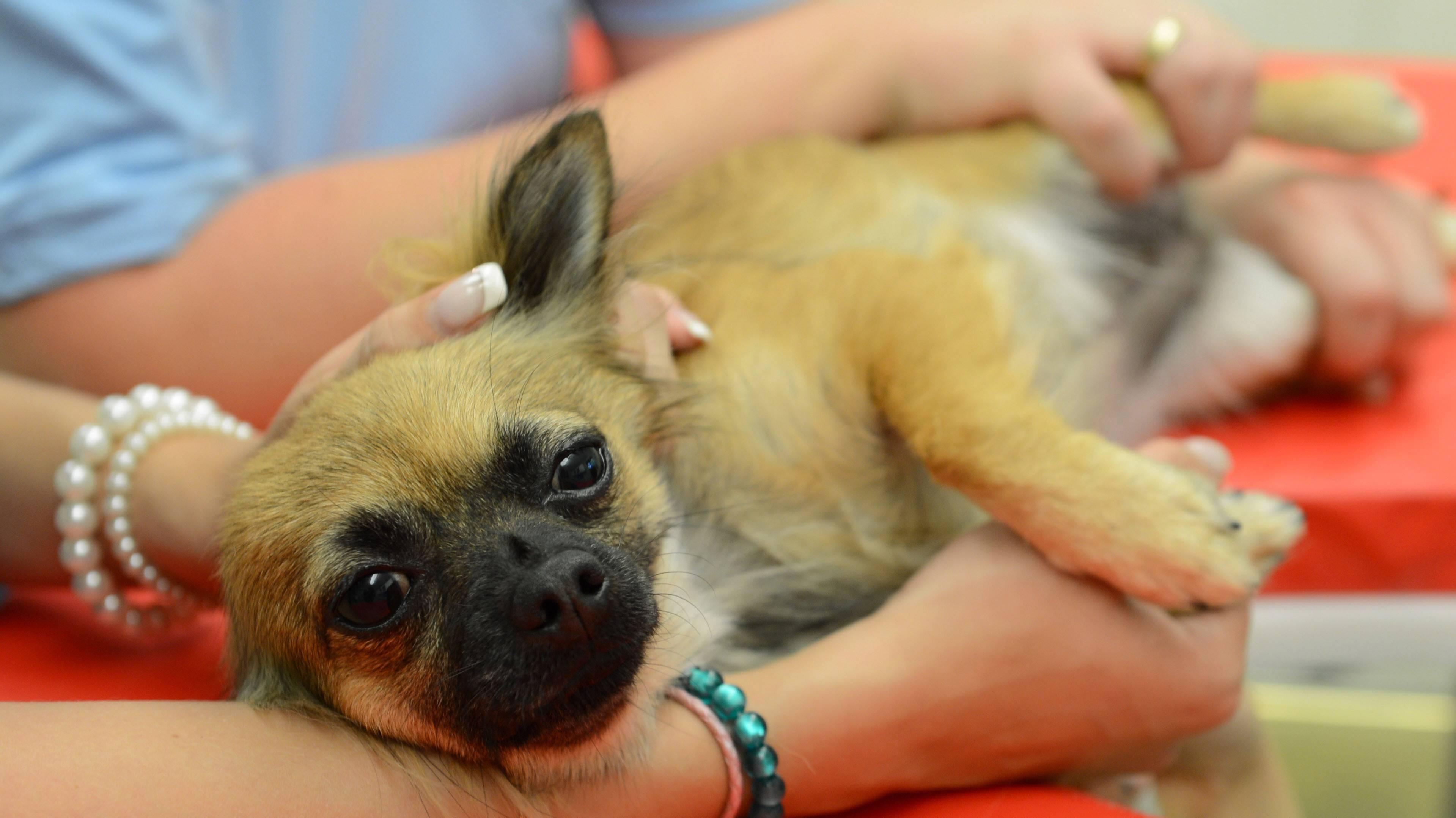 Eine Salmonelleninfektion kann nicht nur bei Menschen, sondern auch beim Hund auftreten.