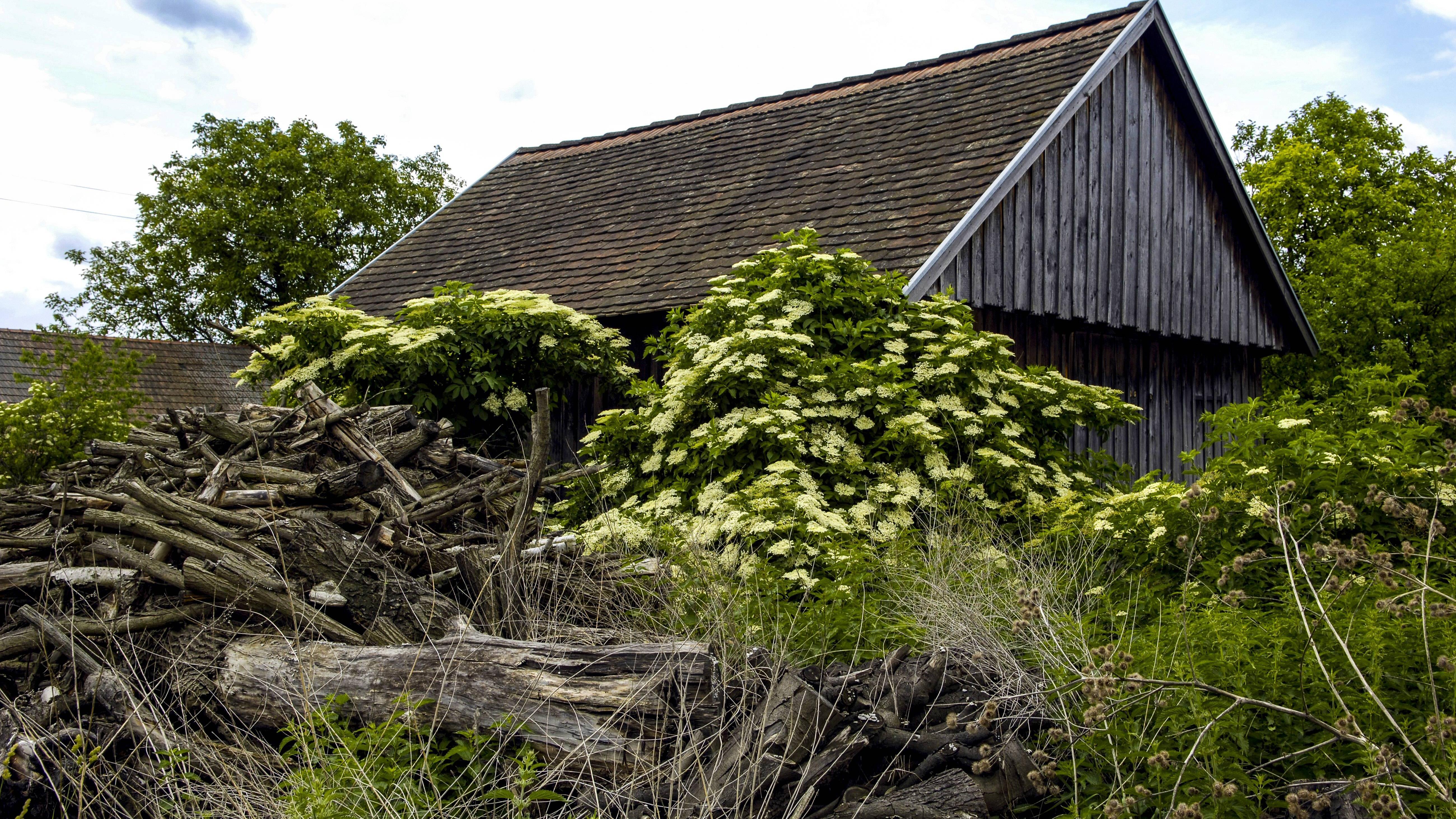 Verwilderten Garten herrichten - so geht's