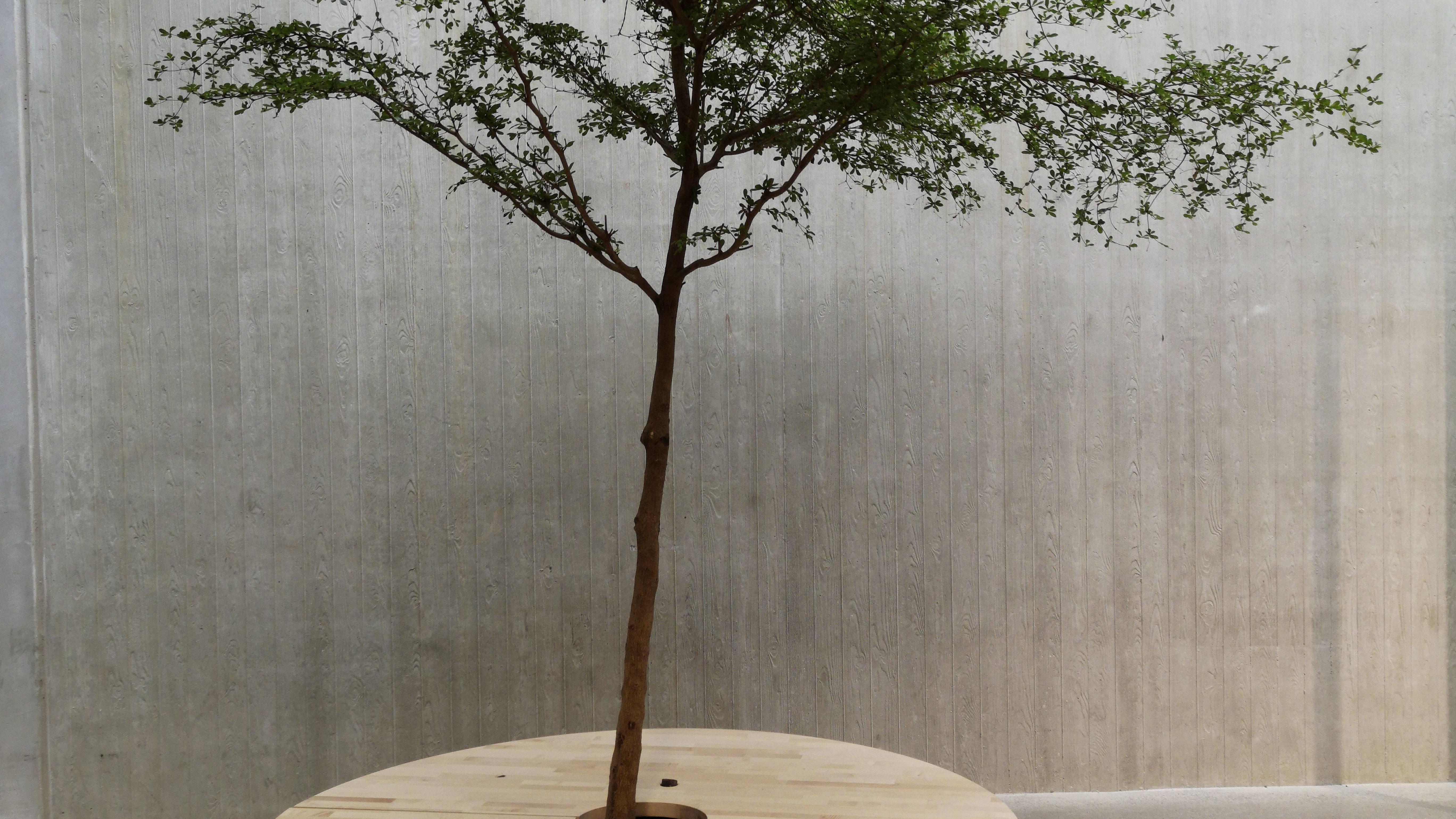 Ikea: Echte Holzliebhaber