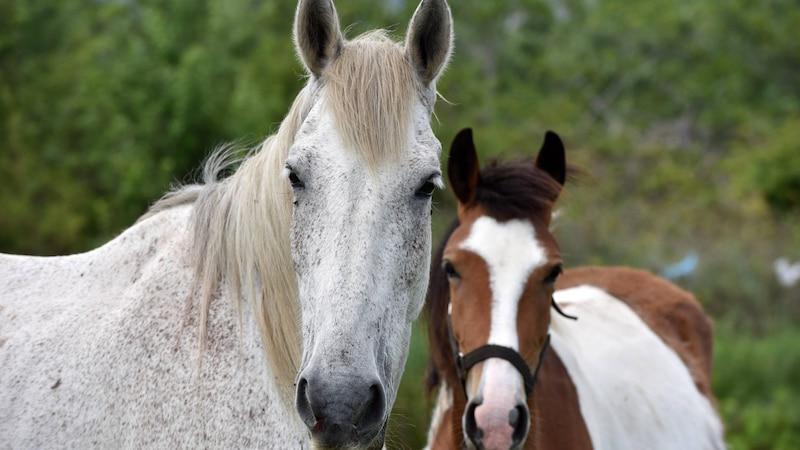 Zeckenbiss beim Pferd: Das müssen Sie wissen