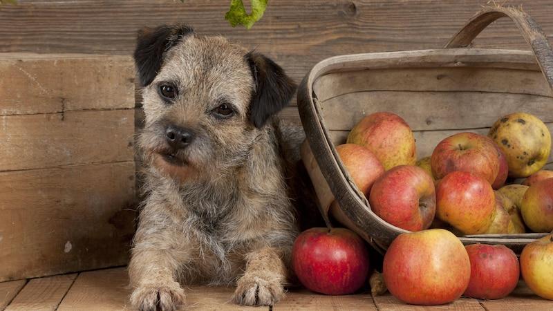 Veganes Hundefutter selbst herstellen: Worauf Sie achten sollten