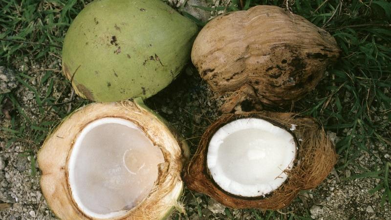 Die Kokosnuss wird zum Aufbewahren kühl und trocken gelagert.