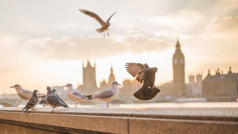 Eine Taubenabwehr kann die Vögel vom Dach fernhalten.