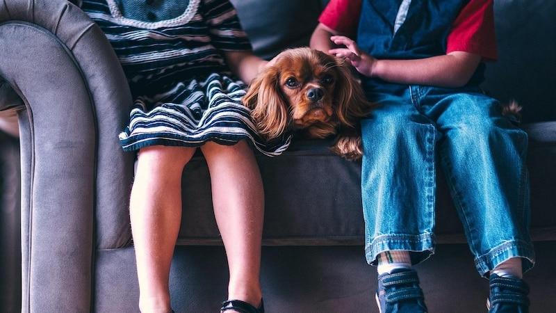 Auf der Couch fühlt der Hund sich wohl, doch seine Haare sind oft nur schwer zu entfernen.
