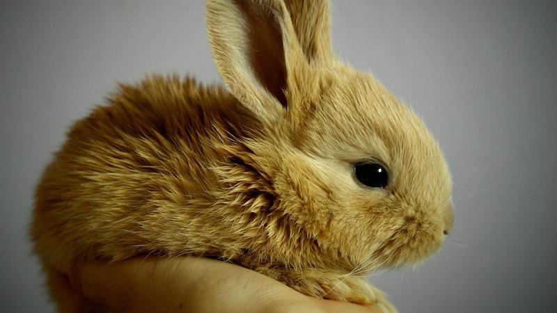 Kaninchen sind zwar niedlich, aber auch scheu.