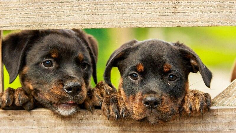 Haustiere haben: Vor -und Nachteile im Überblick
