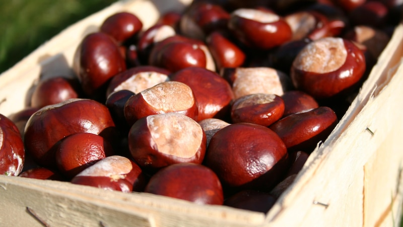 Basteln mit Kastanien: 3 tolle Ideen